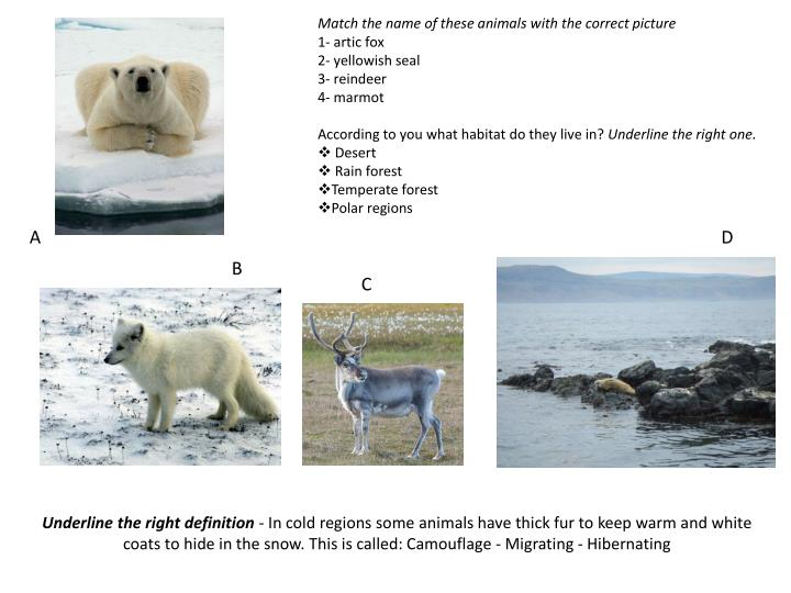 Match the name of these animals with the correct picture