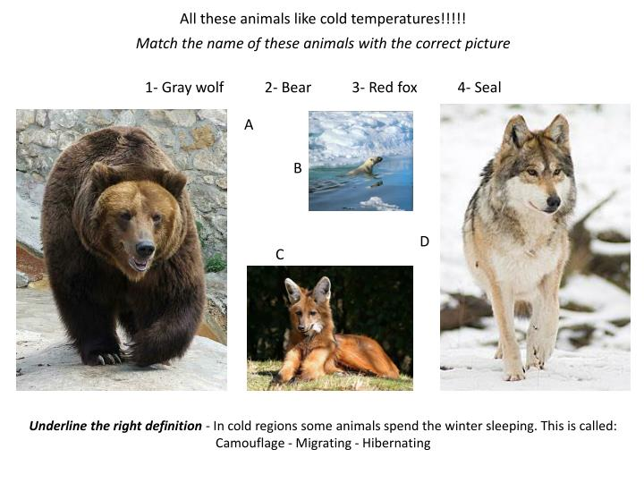 All these animals like cold temperatures!!!!!