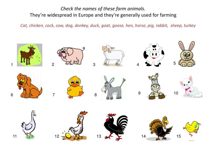 Check the names of these farm animals.