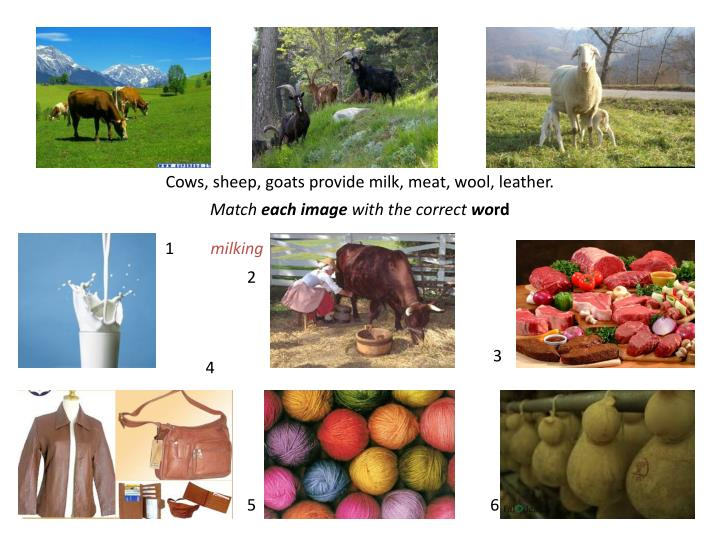 Cows, sheep, goats provide milk, meat, wool, leather.