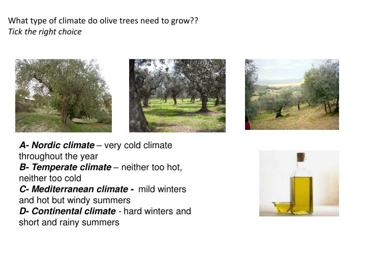 What type of climate do olive trees need to grow??