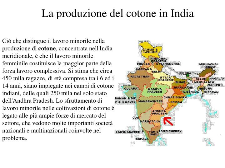 La produzione del cotone in India