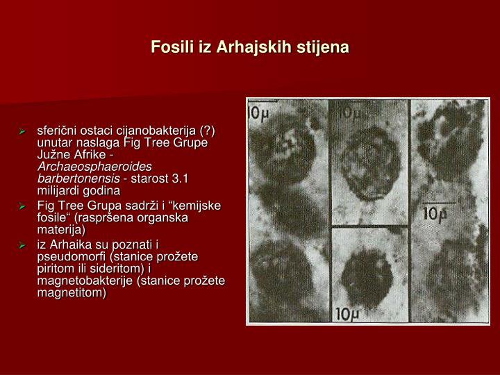 Fosili iz Arhajskih stijena