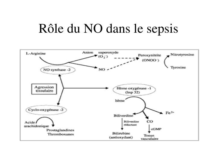 Rôle du NO dans le sepsis