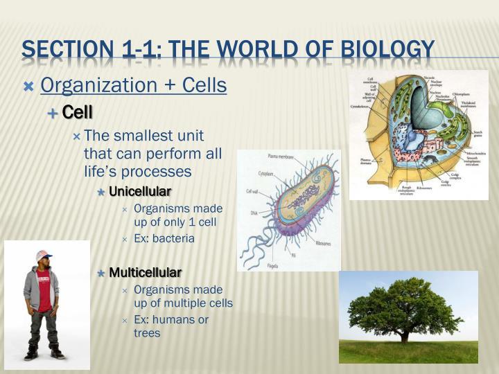 Organization + Cells