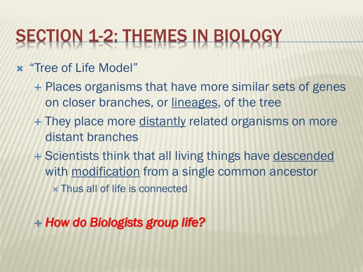 """Tree of Life Model"""