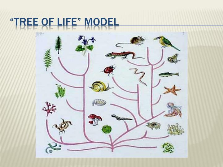 """Tree of life"" model"