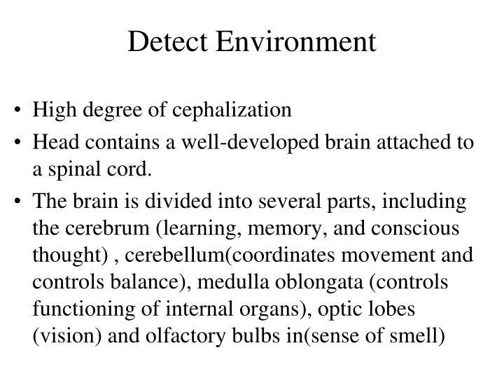 Detect Environment