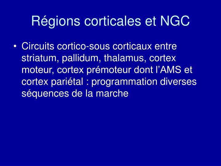 Régions corticales et NGC