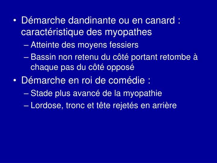 Démarche dandinante ou en canard : caractéristique des myopathes