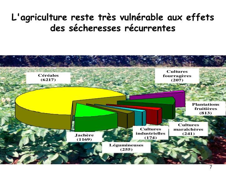 L'agriculture reste très vulnérable aux effets des sécheresses récurrentes
