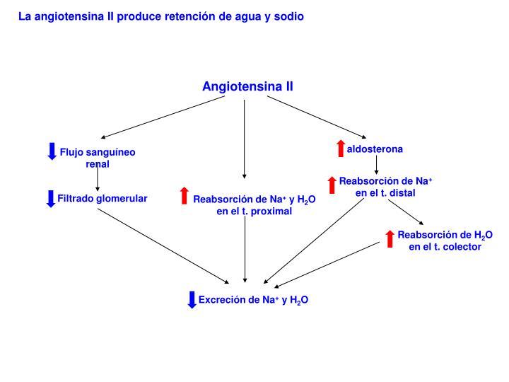 La angiotensina II produce retención de agua y sodio