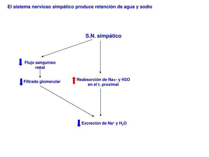 El sistema nervioso simpático produce retención de agua y sodio