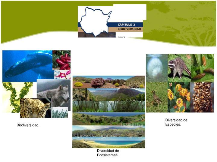 Diversidad de Especies.
