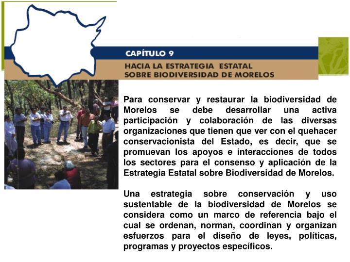 Para conservar y restaurar la biodiversidad de Morelos se debe desarrollar una activa participación y colaboración de las diversas organizaciones que tienen que ver con el quehacer conservacionista del Estado, es decir, que se promuevan los apoyos e interacciones de todos los sectores para el consenso y aplicación de la Estrategia Estatal sobre Biodiversidad de Morelos.