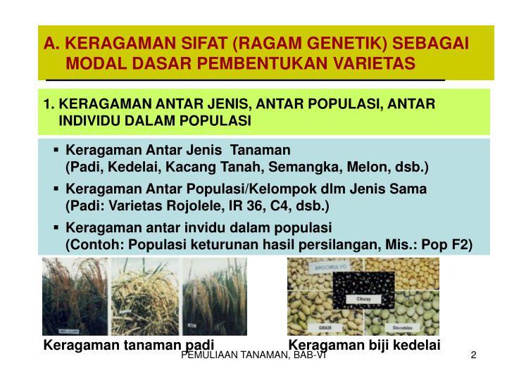 A. KERAGAMAN SIFAT (RAGAM GENETIK) SEBAGAI MODAL DASAR PEMBENTUKAN VARIETAS