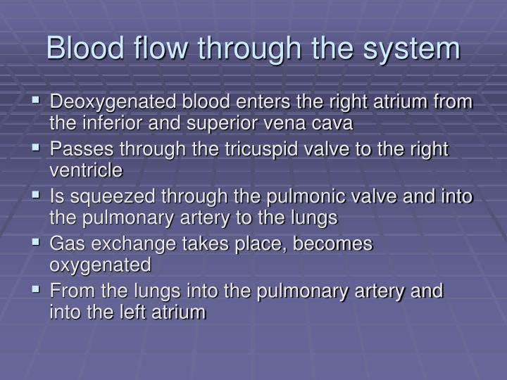 Blood flow through the system