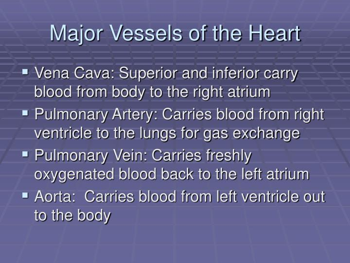 Major Vessels of the Heart
