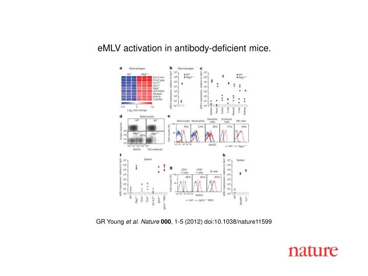 eMLV activation in antibody-deficient mice.