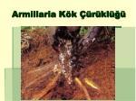 armillaria k k r kl