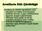 armillaria k k r kl1