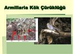armillaria k k r kl2