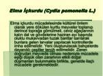 elma kurdu cydia pomonella l1
