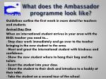 what does the ambassador programme look like