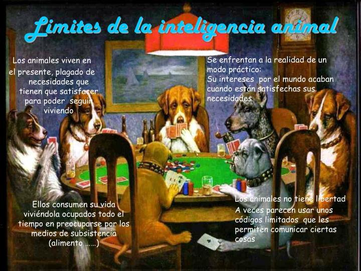 Límites de la inteligencia animal