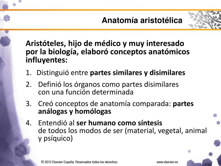 Anatomía aristotélica