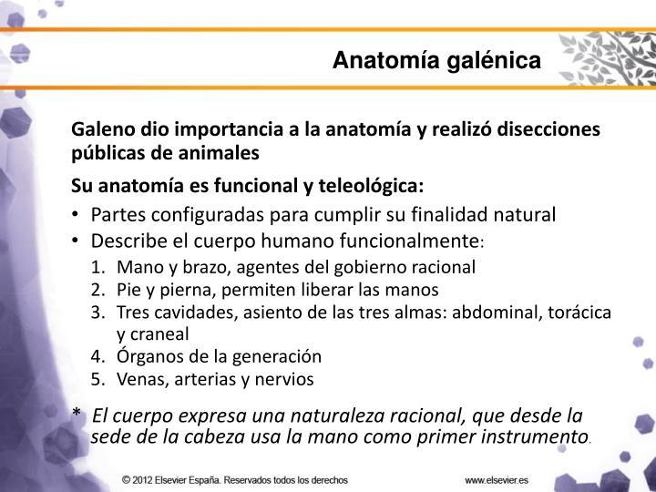 Anatomía galénica