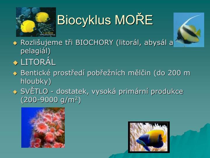 Biocyklus MOŘE