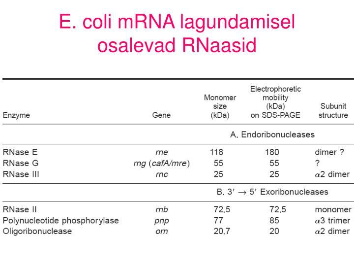 E. coli mRNA lagundamisel osalevad RNaasid