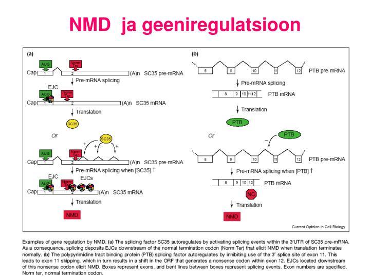 NMD  ja geeniregulatsioon