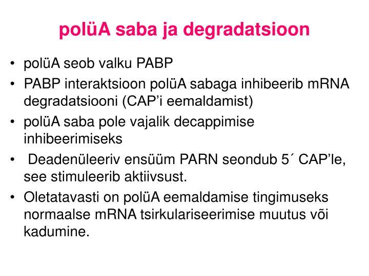polüA saba ja degradatsioon