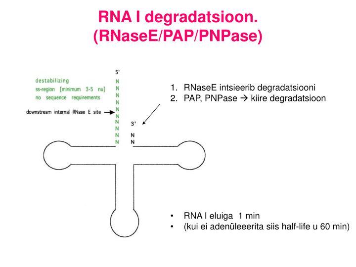 RNA I degradatsioon. (RNaseE/PAP/PNPase)