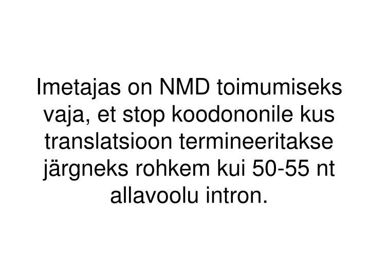 Imetajas on NMD toimumiseks vaja, et stop koodononile kus translatsioon termineeritakse järgneks rohkem kui 50-55 nt allavoolu intron.
