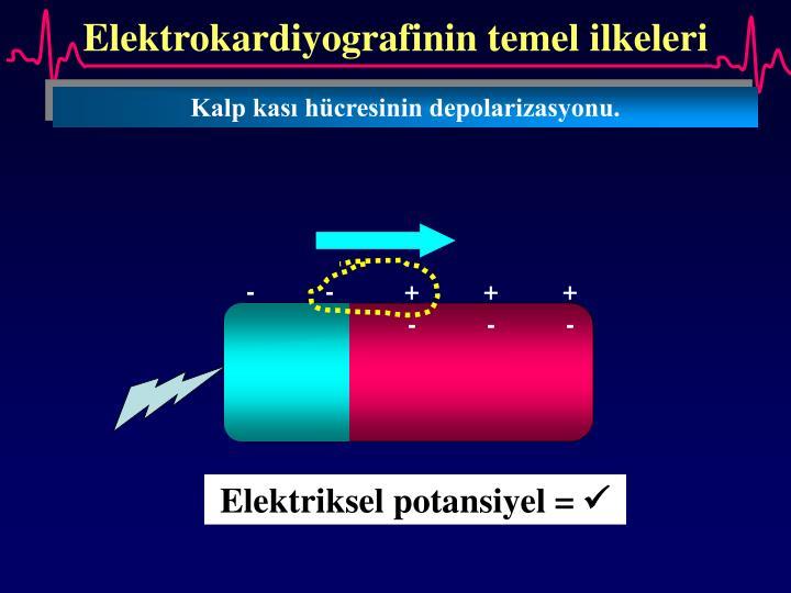Elektrokardiyografinin temel ilkeleri