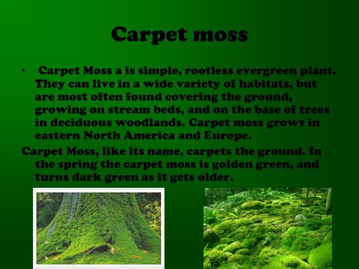 Carpet moss