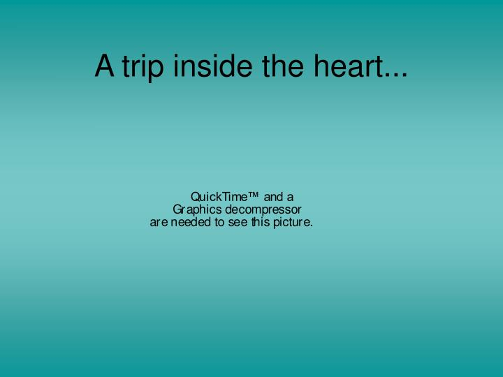 A trip inside the heart...