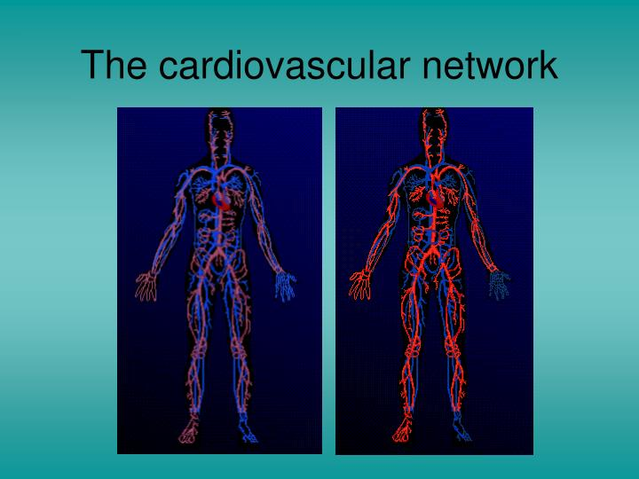 The cardiovascular network