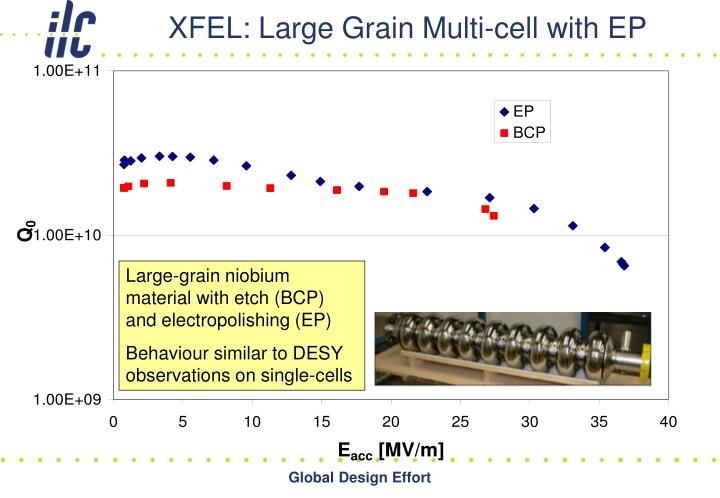 XFEL: Large Grain Multi-cell with EP