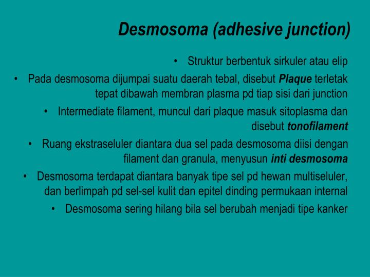 Desmosoma (adhesive junction)