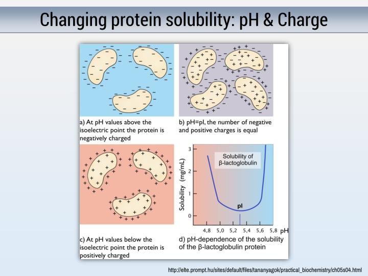 Changing protein solubility: pH & Charge
