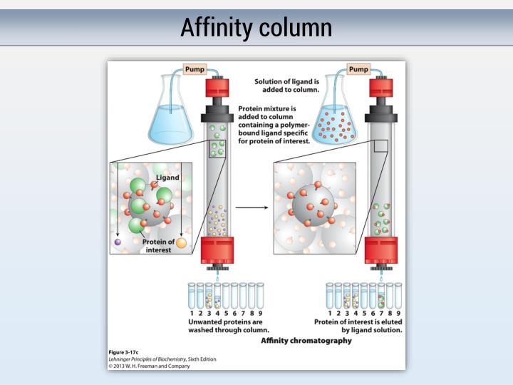 Affinity column