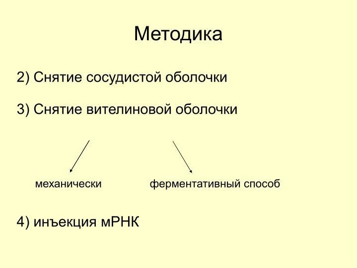2) Снятие сосудистой оболочки