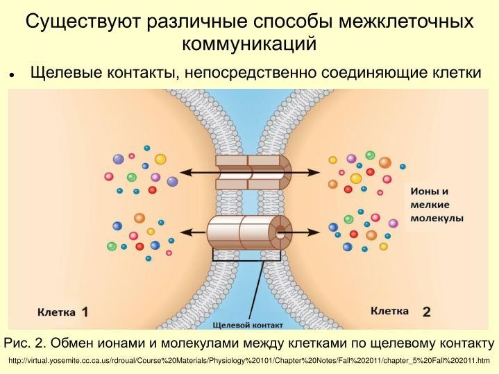 Существуют различные способы межклеточных коммуникаций