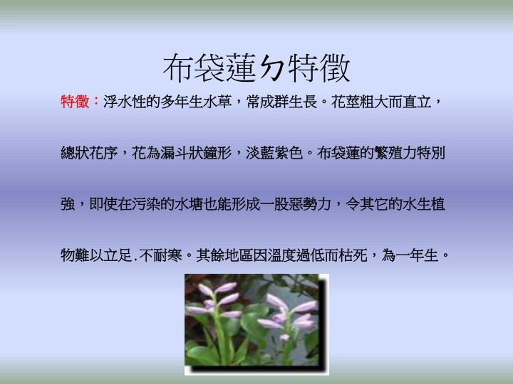 布袋蓮ㄉ特徵