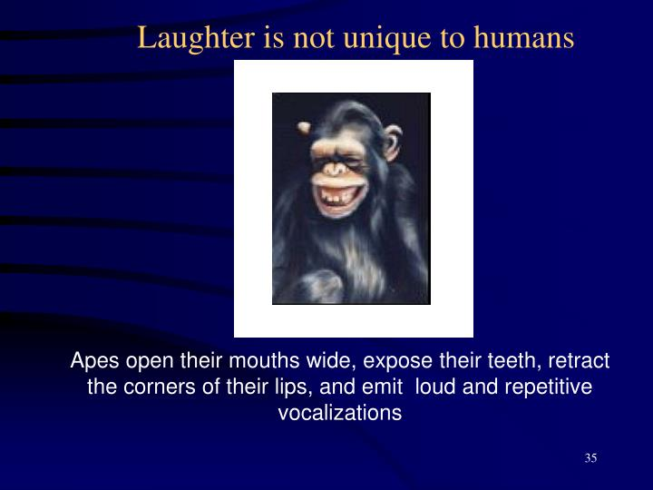 Laughter is not unique to humans