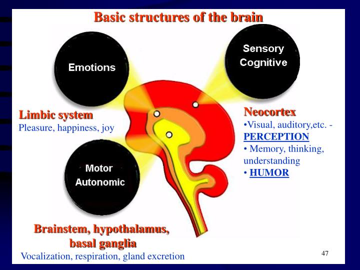 Basic structures of the brain